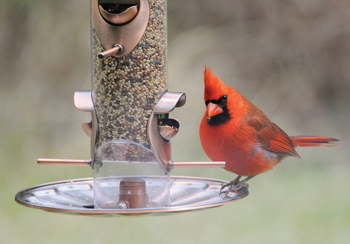 Natural Awakenings Eco Briefs: Making Feeders Safe for Wild Birds